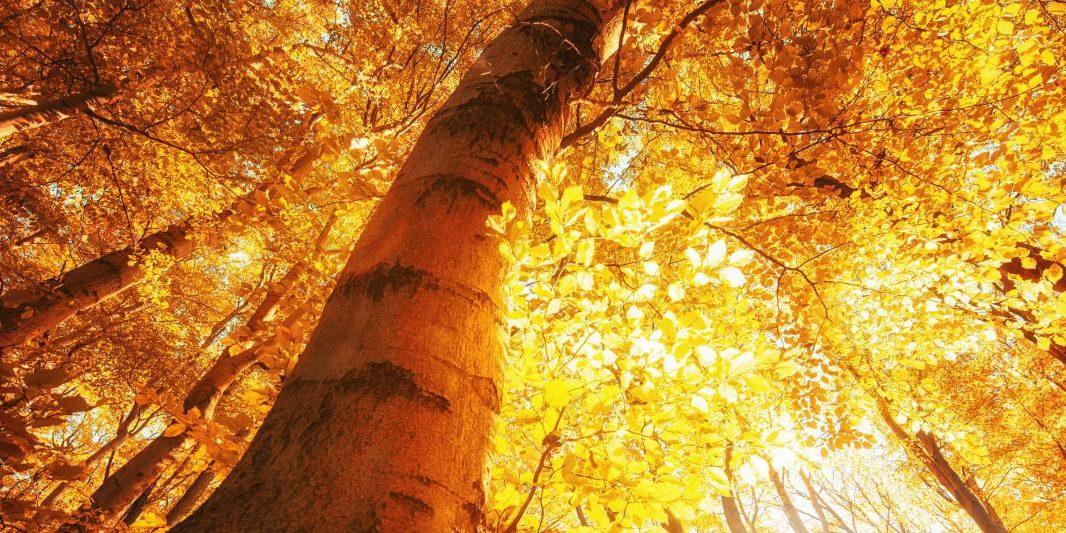 5061974-fall-foliage-nature-tree_Fotor