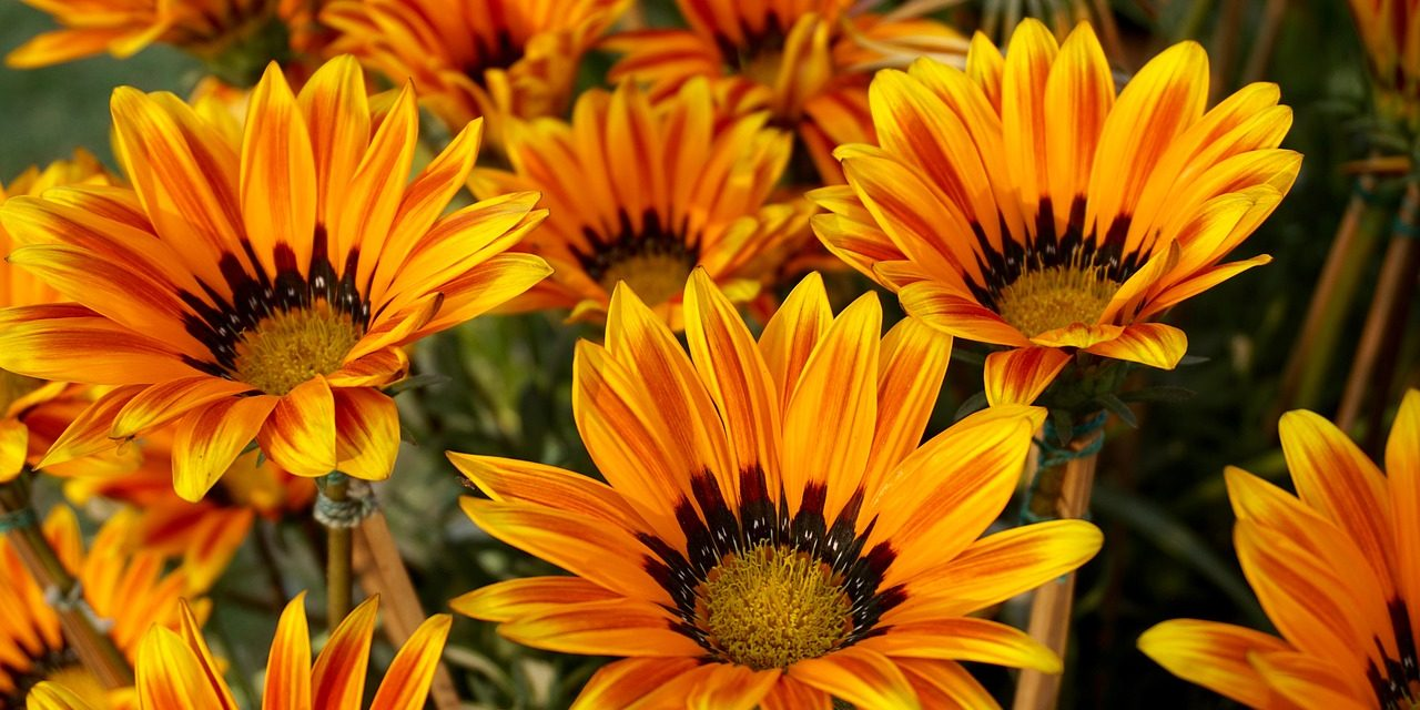 beautiful-flowers-1853562_1280
